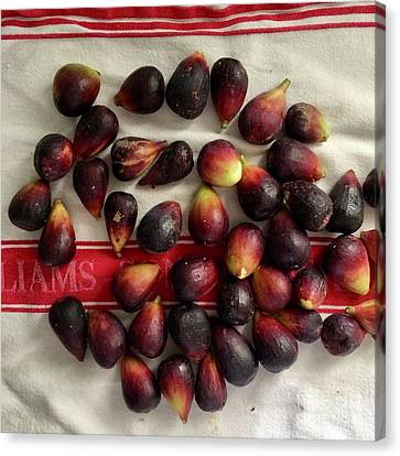 Canvas Print featuring the photograph Fresh Figs by Kim Nelson