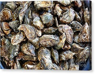 Raw Oyster Canvas Print - Fresh Oysters For Sale by Yali Shi