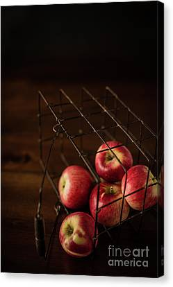 Fresh Picked Apples Canvas Print