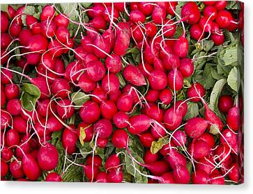 Fresh Red Radishes Canvas Print by John Trax