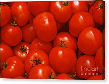 Fresh Red Tomatoes Canvas Print by Thomas Marchessault