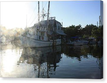 Fresh Shrimp Today Canvas Print by Tara Moorman Photography