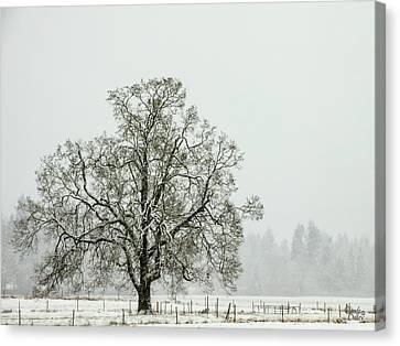 Fresh Snow Canvas Print