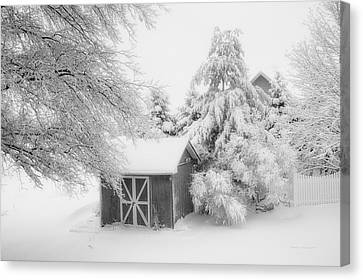 Fresh Snow Fall In March Bw Canvas Print by Thomas Woolworth