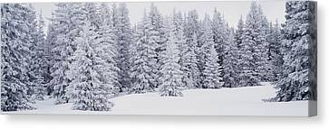 Fresh Snow On Pine Trees Taos County Nm Canvas Print by Panoramic Images
