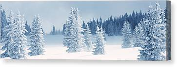 Fresh Snow On Pine Trees, Taos County Canvas Print by Panoramic Images