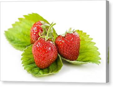 Fresh Strawberries Fruits Lying On Leaf On White  Canvas Print by Arletta Cwalina