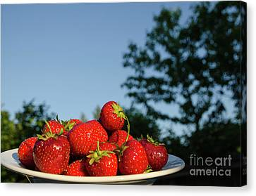 Canvas Print featuring the photograph Fresh Strawberriesl by Kennerth and Birgitta Kullman