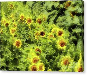 Fresh Sunflowers Canvas Print by Methune Hively