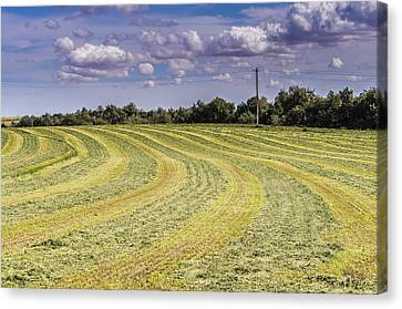 Freshly Mown Hay  Canvas Print by John Trax