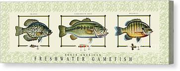 Canvas Print - Freshwater Gamefish by Jon Q Wright