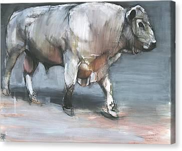 Fresno   Galloway Bull Canvas Print by Mark Adlington