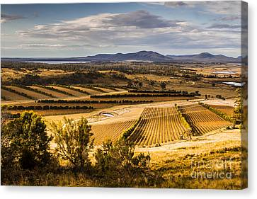 Grapevines Canvas Print - Freycinet Peninsula In Tasmania Australia by Jorgo Photography - Wall Art Gallery