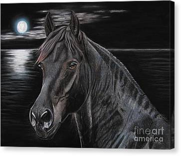 Friasian Gelding Canvas Print by Sabine Lackner
