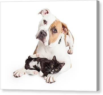 Friendly Pit Bull Dog And Affectionate Kitten Canvas Print