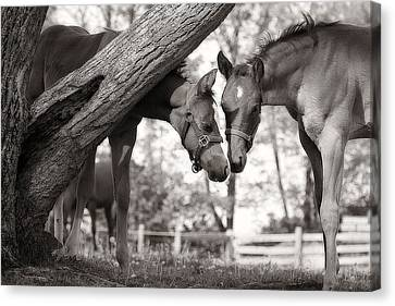 Friends - Black And White Canvas Print by Angela Rath