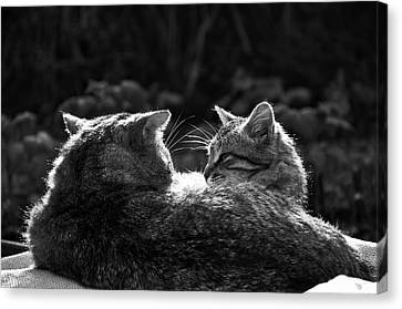 Friends Bw Canvas Print