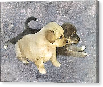 Doggy Cards Canvas Print - Friends Forever  by Svetlana Sewell