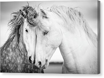 Black And White Canvas Print - Friends V by Tim Booth