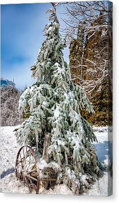 Frigid Spruce Canvas Print by Steve Harrington