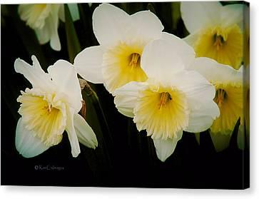 Frilly Daffodils Canvas Print by Kae Cheatham