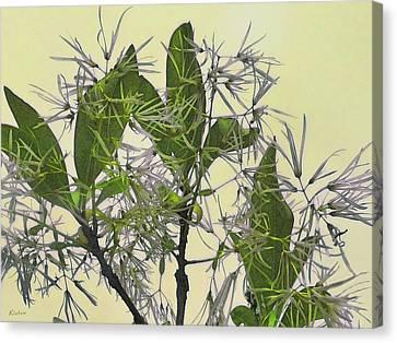 Fringe Tree Canvas Print