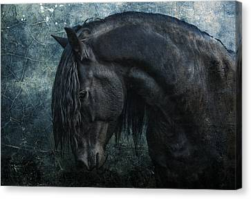 Frisian Stallion Canvas Print