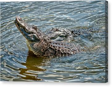 Canvas Print featuring the photograph Frisky In Florida by Christopher Holmes
