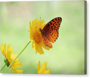 Fritillary Fun Canvas Print