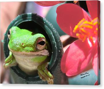Frog At Selby Canvas Print by Michele Penn