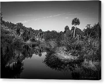 Mangrove Forest Canvas Print - Frog Creek 2 by Marvin Spates
