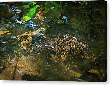 Canvas Print featuring the photograph Frog Days Of Summer by Bill Pevlor