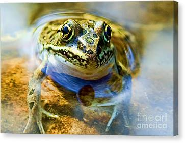 Frog In Pond Canvas Print