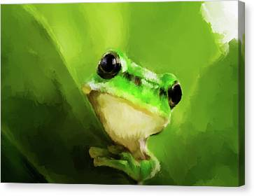 Frog Canvas Print by Michael Greenaway