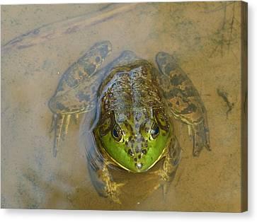 Frog Of Lake Redman Canvas Print by Donald C Morgan