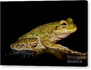 Canvas Print featuring the photograph Cuban Tree Frog by Olga Hamilton