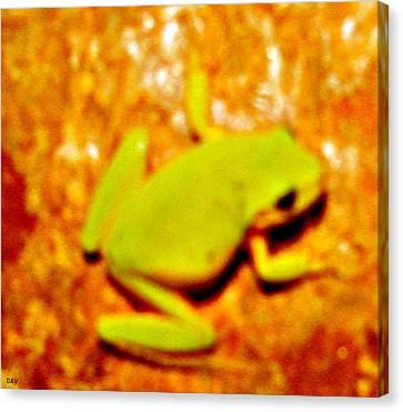 Frog On The Wall Canvas Print by Debra     Vatalaro