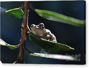 Frog With Twinkle In Eye Canvas Print by Wayne Nielsen