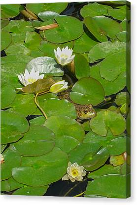 Frog With Water Lilies Canvas Print