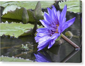 Frog With Water Lily Canvas Print by Linda Geiger