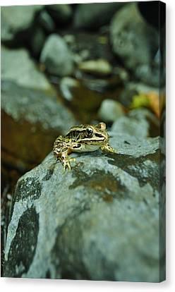 Canvas Print - Froggy by Brynn Ditsche