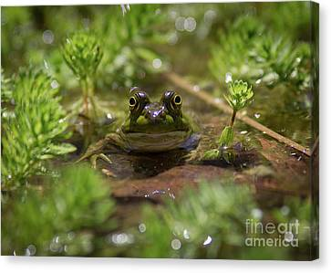 Canvas Print featuring the photograph Froggy by Douglas Stucky