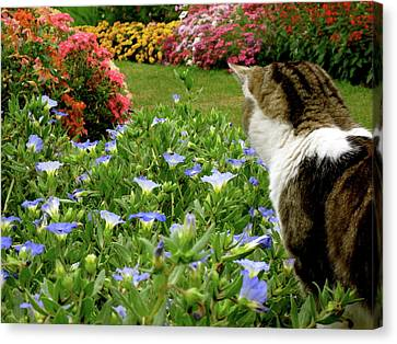 Frolic In The Flowers Canvas Print