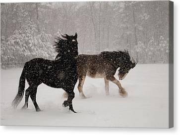 Frolic In The Snow Canvas Print by Kristia Adams