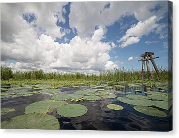 From A Frog's Point Of View - Lake Okeechobee Canvas Print by Christopher L Thomley
