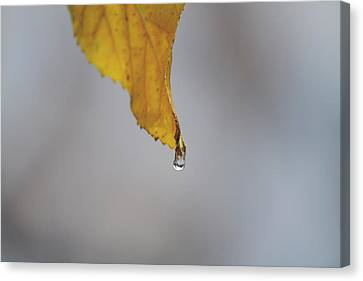 From My Veins Canvas Print by Laurie Search