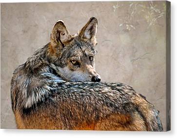 Canvas Print featuring the mixed media From Out Of The Mist by Elaine Malott