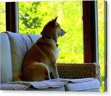 From The Dog Side Of View Canvas Print by Aron Chervin