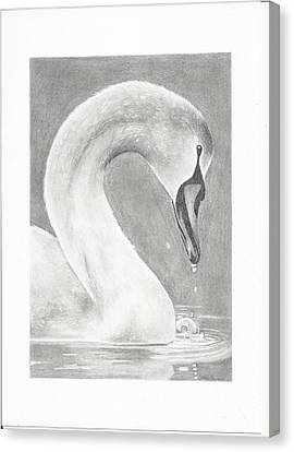 From Ugly Duckling To Perfect Beauty Canvas Print by Darina Panisova