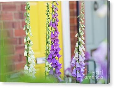 Front Garden Foxgloves Canvas Print by Tim Gainey